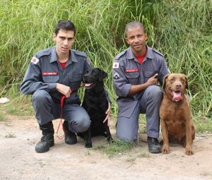 Bombeiros buscam certificação de cães para a Copa de 2014